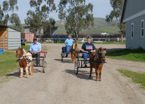 Roger Cleverly Equestrian Training Photo Gallery